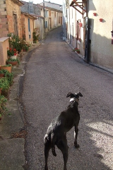 dog home street